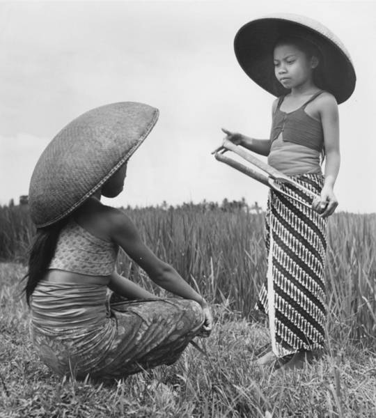 Indonesian Culture Photograph - Girls In Rice Field by Richard Harrington