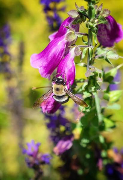 Photograph - Give Me A Buzz by Shannon Kelly