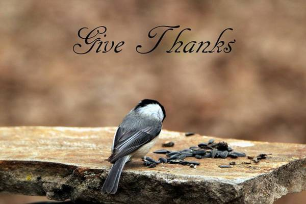 Photograph - Give Thanks by Sheila Brown
