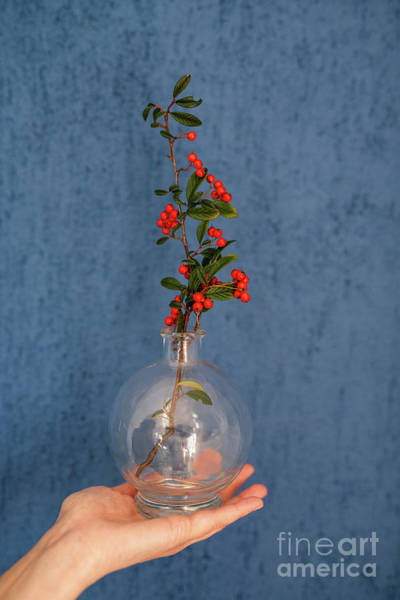 Wall Art - Photograph - Glass Vase With Decorative Branch  by Viktor Pravdica