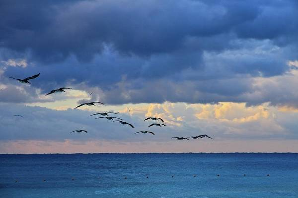 Wall Art - Photograph - Glide Of Pelicans, Riviera Maya by J.p.andersen Images