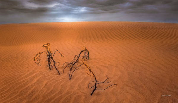 Photograph - Glimmer Of Light In A Dark  Desert Sky by Tim Bryan