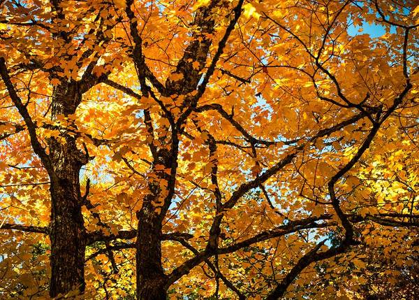 Wall Art - Photograph - Glorious Autumn by Karen Wiles
