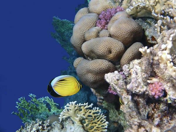 Photograph - Glorious Beautiful Red Sea Underwater World  by Johanna Hurmerinta