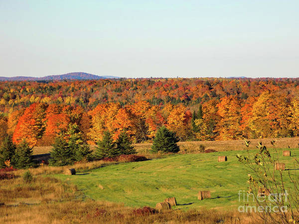 Aroostook Photograph - Glorious Maine Foliage by William Tasker