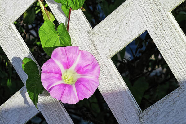 Photograph - Glory Morning And Fence by Tatiana Travelways
