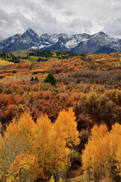 Photograph - Glowing Aspens At Dallas Divide by Ray Mathis