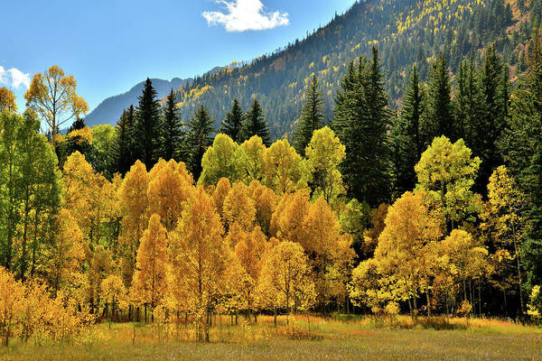 Photograph - Glowing Aspens Beneath Mcclure Pass by Ray Mathis