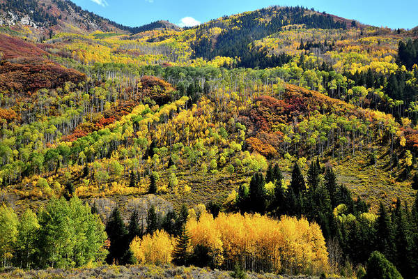 Photograph - Glowing Aspens On Mountainsides Along Highway 133 by Ray Mathis