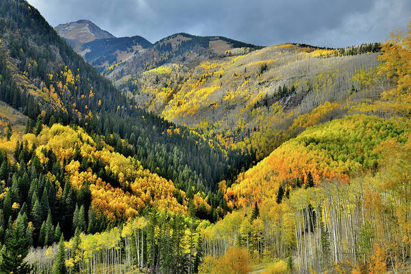 Photograph - Glowing Aspens On Mountainsides Along Hwy 145 In Co by Ray Mathis