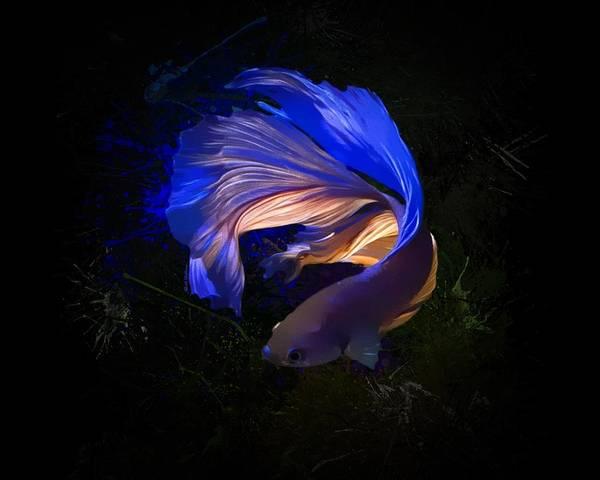 Digital Art - Glowing Colorful Betta Fish by Scott Wallace Digital Designs