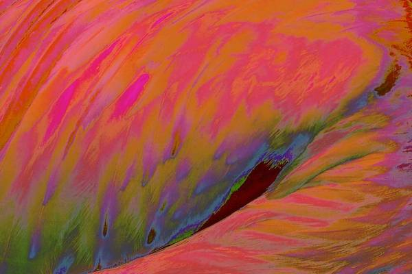 Photograph - Glowing Feathers by Susan Rydberg