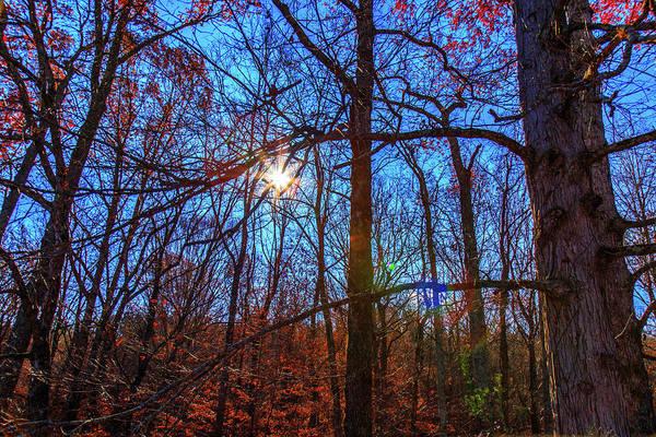 Photograph - Glowing Leaves by Doug Camara