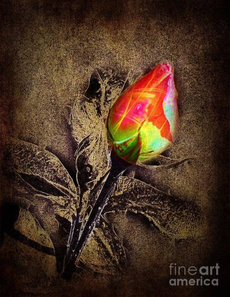 Photograph - Glowing Rose by David Neace