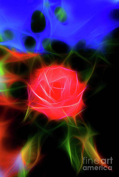 Wall Art - Mixed Media - Glowing Rose In The Garden by Viktor Birkus