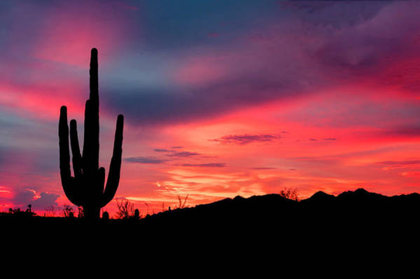 Photograph - Glowing Saguaro by Laura Hedien