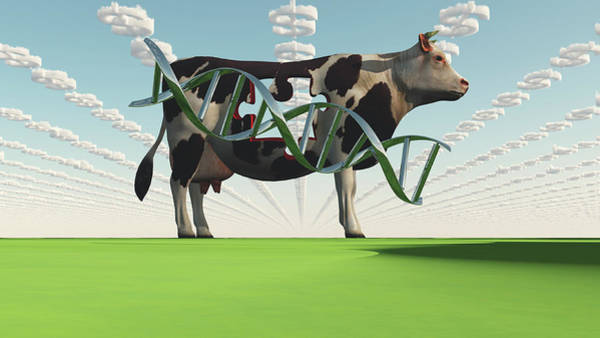 Photograph - Gmo Business. Cow And Dna Strand by Bruce Rolff