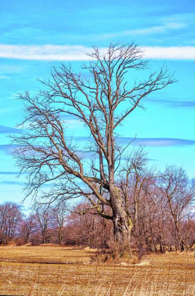 Wall Art - Photograph - Gnarled Tree And Marbled Sky by Steve Harrington