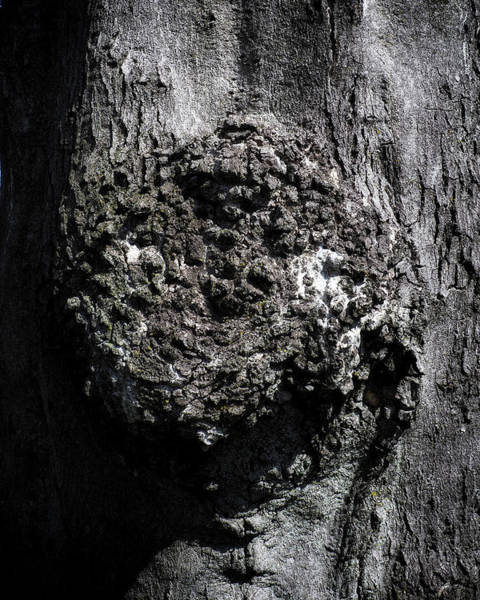 Photograph - Gnarly Bark by Bill Swartwout Photography