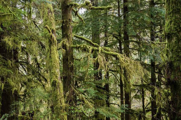 Photograph - Gnat Creek Forest by Robert Potts
