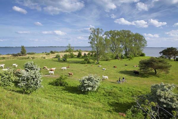 Sea Cow Photograph - Gnitz Peninsula And Achterwasser by Thomas Grundner / Look-foto