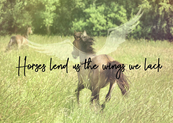 Photograph - Go Flying Quote by Dressage Design