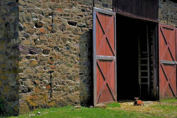 Photograph - Goat And Stone Barn Doors by Val Arie
