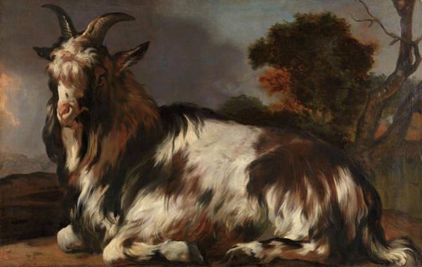 Breeding Painting - Goat Lying Down by Jan Baptist Weenix