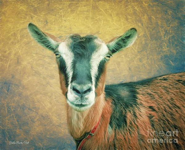 Photograph - Goat Portrait by Jutta Maria Pusl