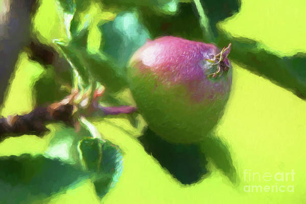 Wall Art - Photograph - God Does Make Little Green Apples 5031ti by Doug Berry