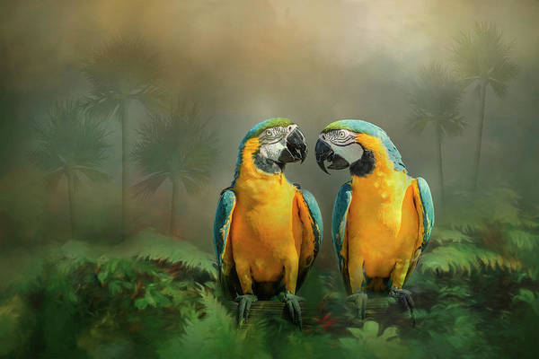 Gold And Blue Macaw Pair Art Print