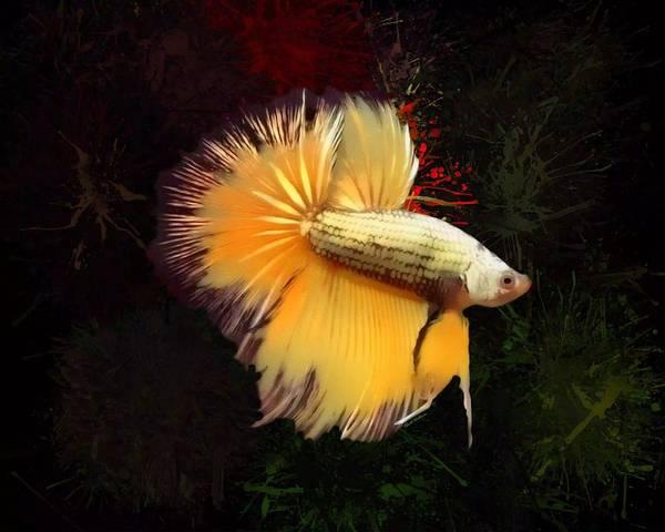 Digital Art - Gold Betta Fish Portrait  by Scott Wallace Digital Designs