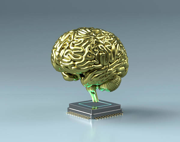 Wall Art - Photograph - Gold Brain On Top Of Central Processing by Ikon Images