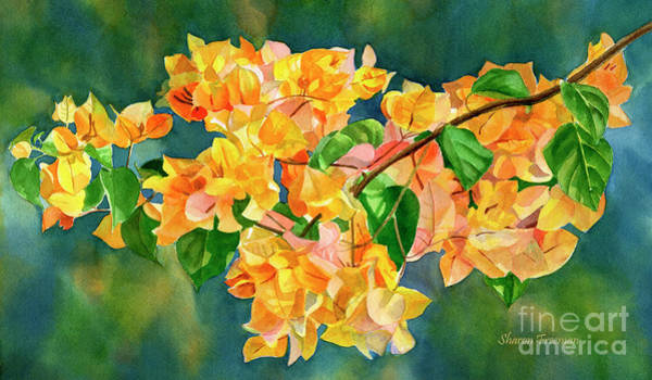 Bougainvillea Wall Art - Painting - Gold Colored Bougainvilles With Background by Sharon Freeman