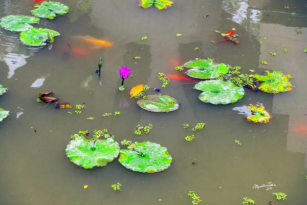 Wall Art - Photograph - Gold Fish And Lily Pads by Madeline Ellis
