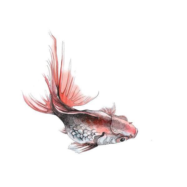 Drawing - Gold Fish by Ina Petrashkevich