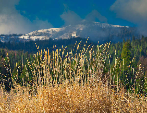 Gold Grass Snowy Peak Art Print