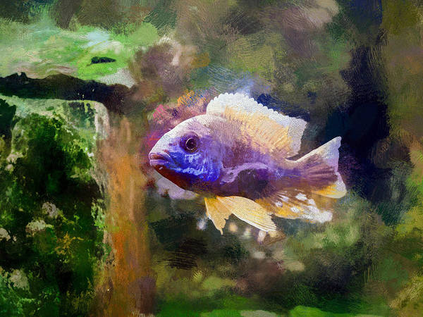 Digital Art - Gold Peacock Cichlid by Don Northup