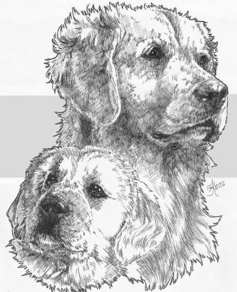 Drawing - Golden And Pup by Barbara Keith