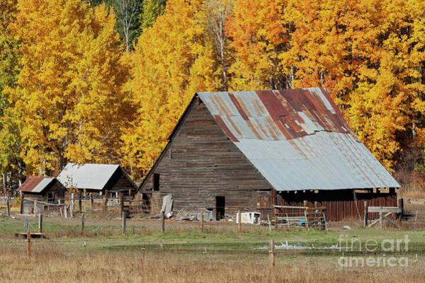 Wall Art - Photograph - Golden Aspen Barn by Mike Dawson