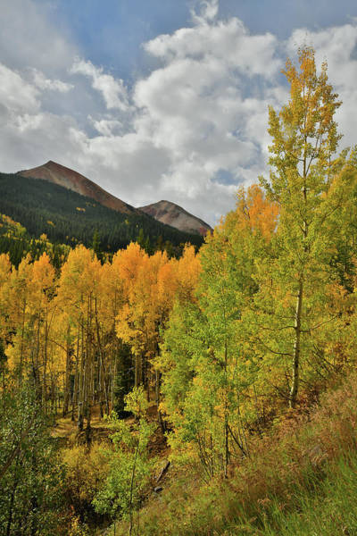 Photograph - Golden Aspens Beneath Red Mountains by Ray Mathis