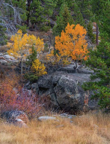 Photograph - Golden Aspens by Jonathan Hansen