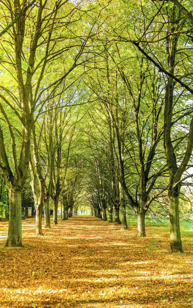 Photograph - Golden Autumn I by Anne Leven