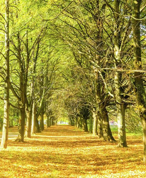 Photograph - Golden Autumn Iv by Anne Leven