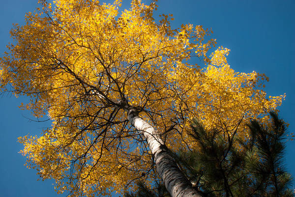 Photograph - Golden Beauty by Carl Young