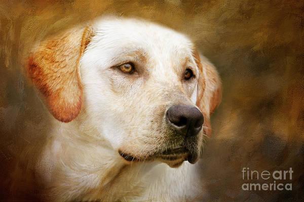 Photograph - Golden Boy by Eleanor Abramson