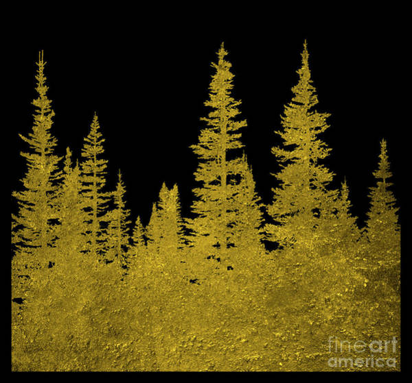 Wall Art - Photograph - Golden Christmas Trees Square by John Stephens
