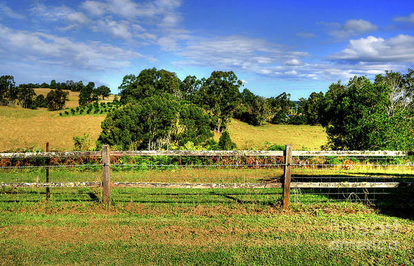 Wall Art - Photograph - Golden Countryside By Kaye Menner by Kaye Menner