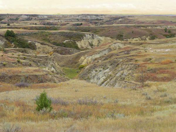 Photograph - Golden Dakota Prairie Reverie by Cris Fulton