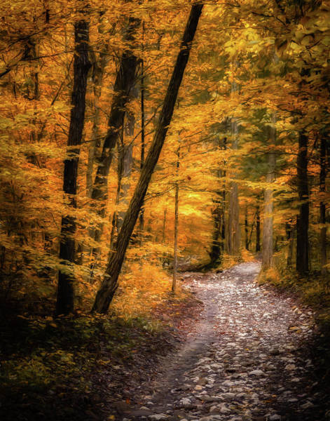 Lost River State Park Wall Art - Photograph - Golden Forest by James Barber